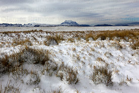 Altiplano grassland after fresh winter snowfall, Mt Illimani in distance, Cordillera Real, Bolivia