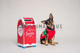 Cute small dog in a seasonal sweater next to a letters to santa mailbox