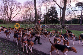 Huntsman John Holliday takes Belvoir hounds for their morning walk