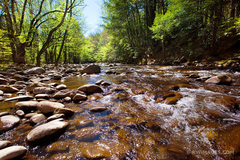FOREST STREAM SMOKY MOUNTAINS COLOR