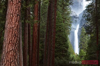 Lower Yosemite fall and forest, Yosemite, USA