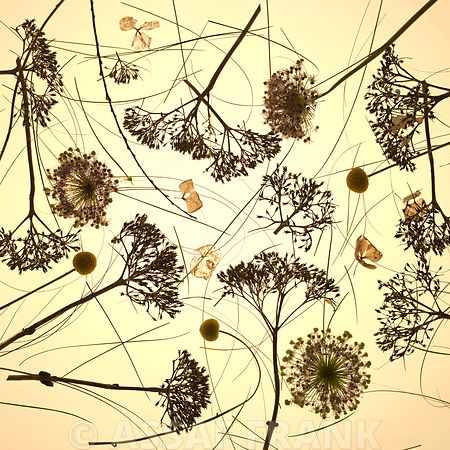 Close-up of dried flowers