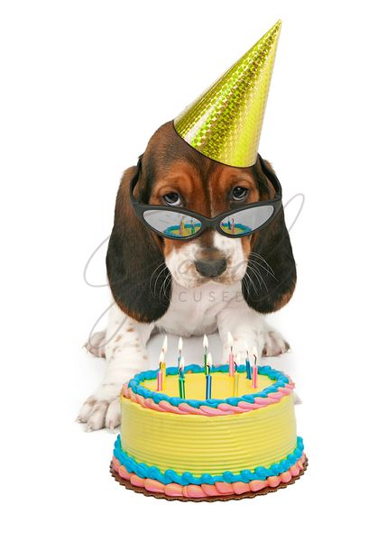 Funny Birthday Basset Hound Dog With Cake