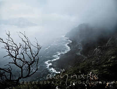 Clouds and mist part to reveal a road winding above sea cliffs on a steep mountain, with a stark burnt tree and other fynbos ...