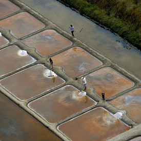 People collecting salt from salt evaporation ponds and child waving, Olonne, Vendee, France, July.