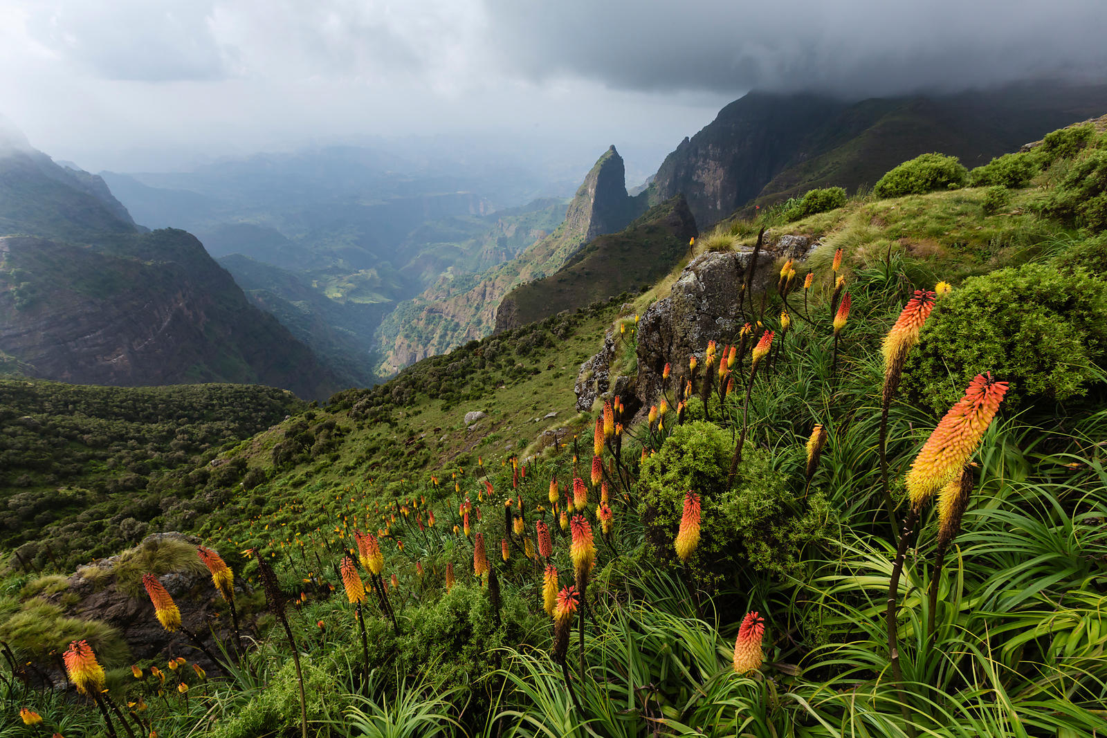 Red Hot Poker and the Simien Mountains