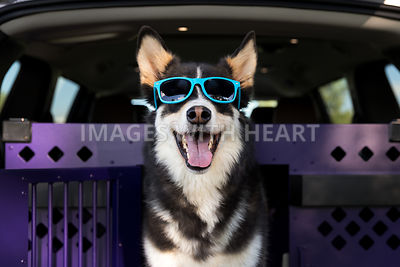 husky dog riding in van wearing sunglasses