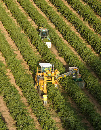Grape harvester, Mildura, Australia.