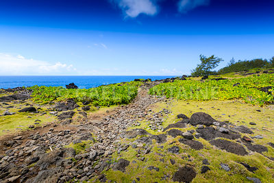 Typical landscape with volcanic rock, Reunion Island