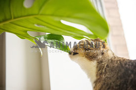 Cat nibbling on a indoor plant