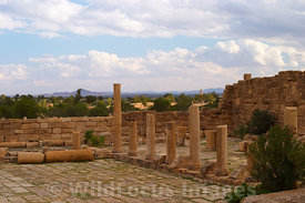 Standing on the steps of the Temple of Minerva looking over the forum, Sbietla Tunisia; Landscape