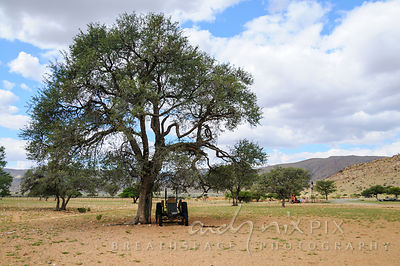 One old farm tractor under a tree.