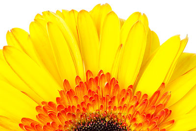 Yellow & Orange Daisy Half