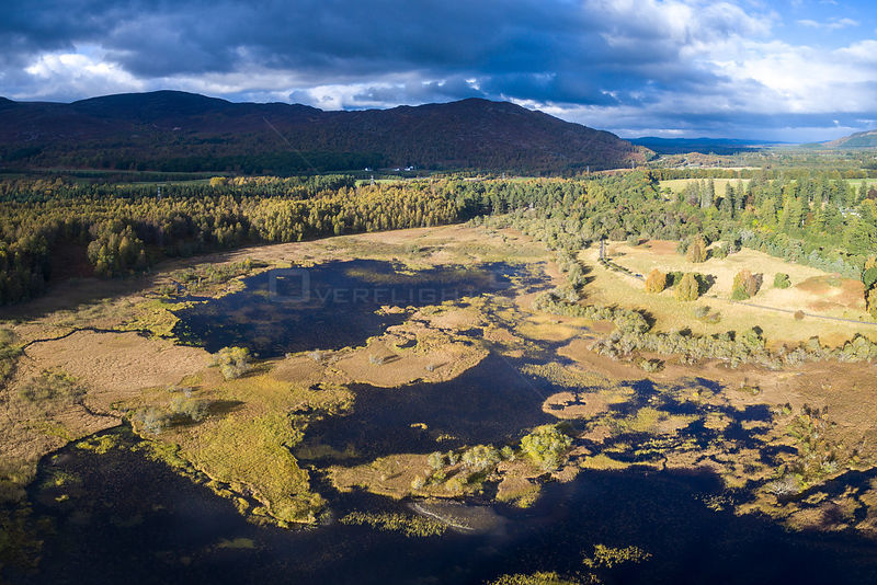 Bogach, a wetland area in the outskirts of Aviemore, Cairngorms National Park, Scotland, UK, October 2016.