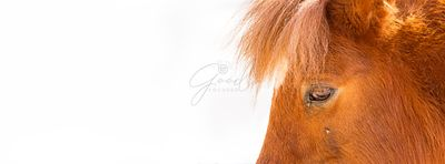 Miniature Horse Eyes Closeup Web Banner