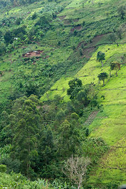 Aerial view of farmland on the edge of Bwindi Impenetrable Forest, Uganda, East Africa, October 2008