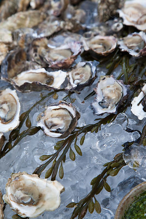 Beautiful raw oysters on a bed of ice ready for service