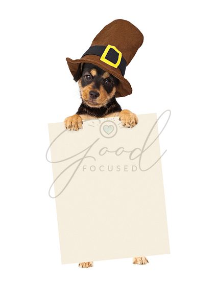 Thanksgiving Puppy Dog Holding Blank Sign