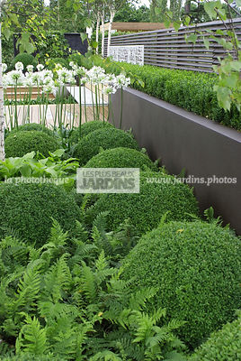 Ball shaped, Bush, Buxus, Contemporary garden, Evergreen, Low wall, Sphere shaped, Topiary, Common Box, Digital, Formal garden