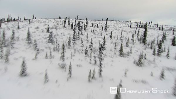 Flying over tree-dotted snowy hilltop in Alaska