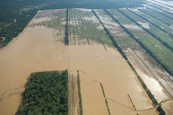 Aerial view of Soya bean plantation flooded during the great 2008 flood of Mamoré River, in Santa Cruz Department, Bolivia.