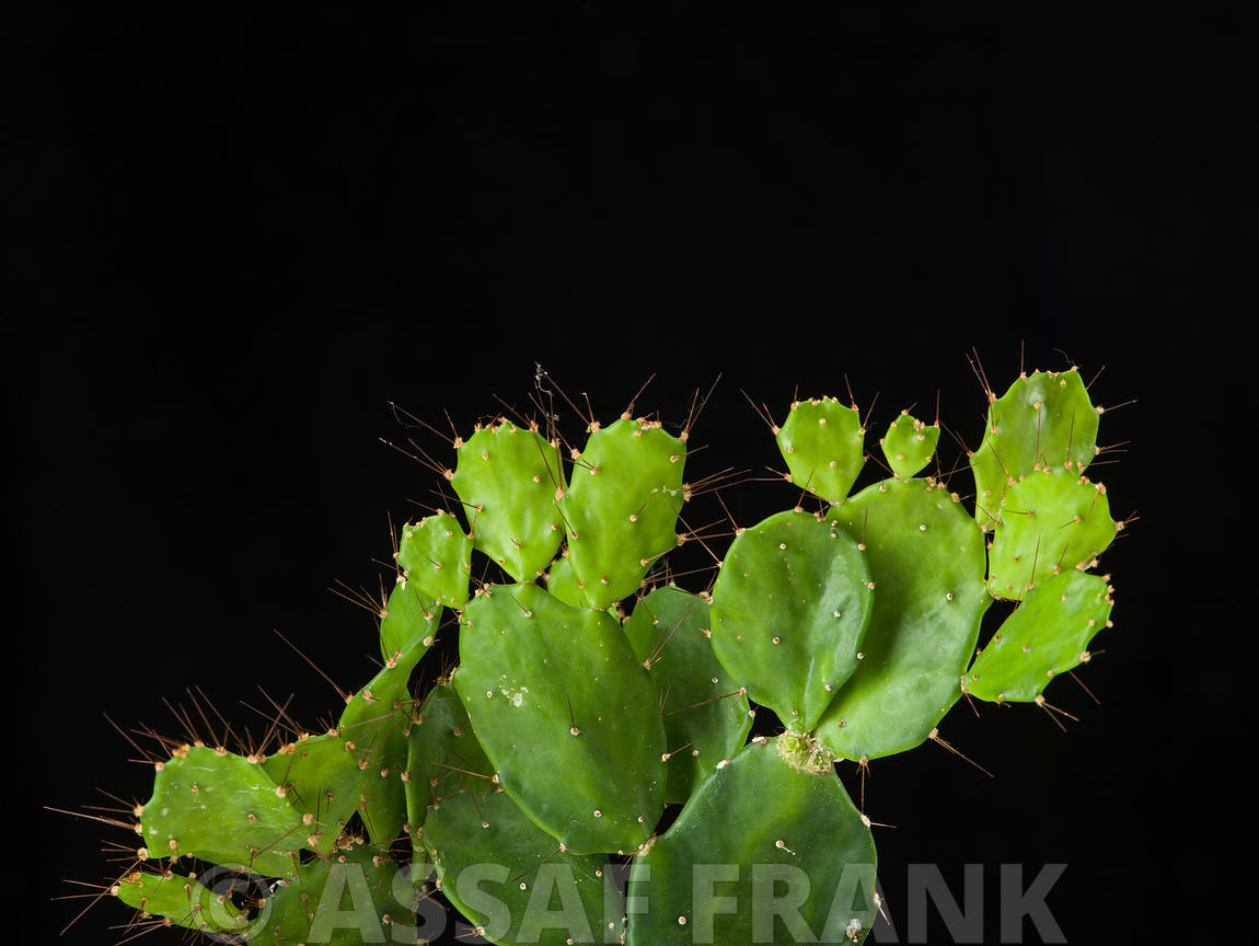 Cactus plant on black background
