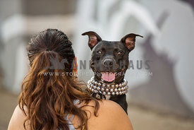 pit bull in pearls being carried by owner