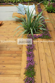 Aromatic plant, Border, garden designer, Perennial, Terrace, Thyme, Contemporary Terrace, Digital, Silver spear