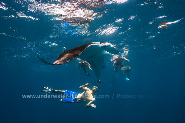 Manta ray and diver!