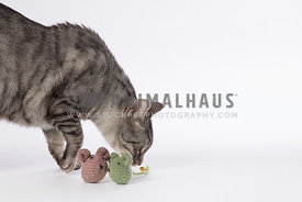 cat playing with toy mice