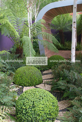 Ball shaped, Buxus, Contemporary garden, Sphere shaped, Topiary, Common Box, Digital, Summer, Tree Fern