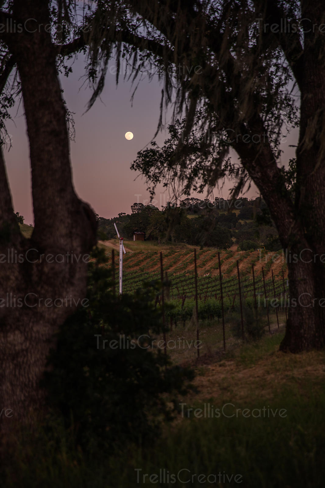Full moon over vineyards at dusk