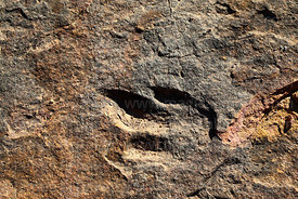 Three toed dinosaur footprint in limestone strata, Torotoro National Park, Bolivia