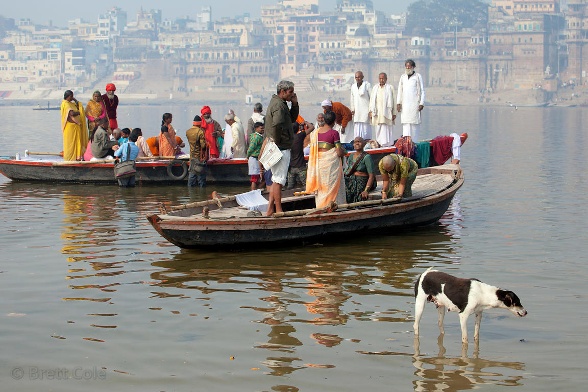 A stray dog walks in the Ganges River near boats full of pilgrims, Varanasi, India.