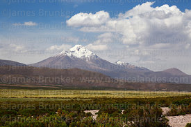 Cabaray / Cabaraya volcano and tola bushes in Central Andean dry puna deser, Isluga National Park, Region I, Chile