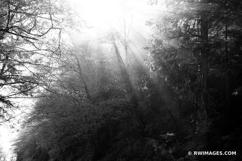 PACIFIC NORTHWEST FOREST OLYMPIC PENINSULA WASHINGTON STATE BLACK AND WHITE