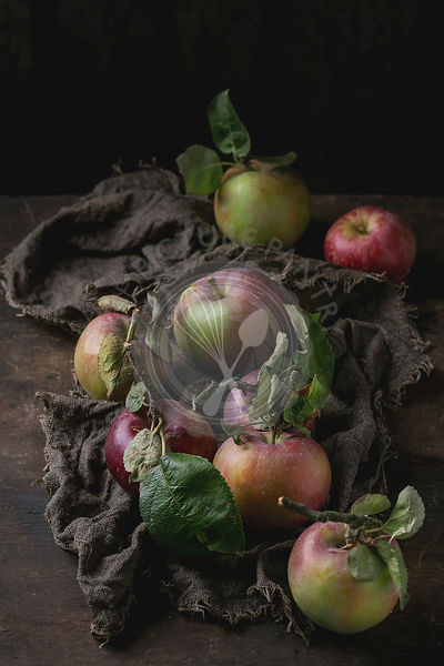 Harvest of wild apples, rustic style.