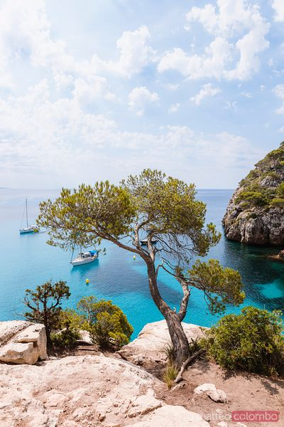 Tree and blue mediterranean sea, Menorca, Spain