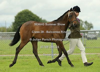 South East Arabian Horse Group Summer Show 2016