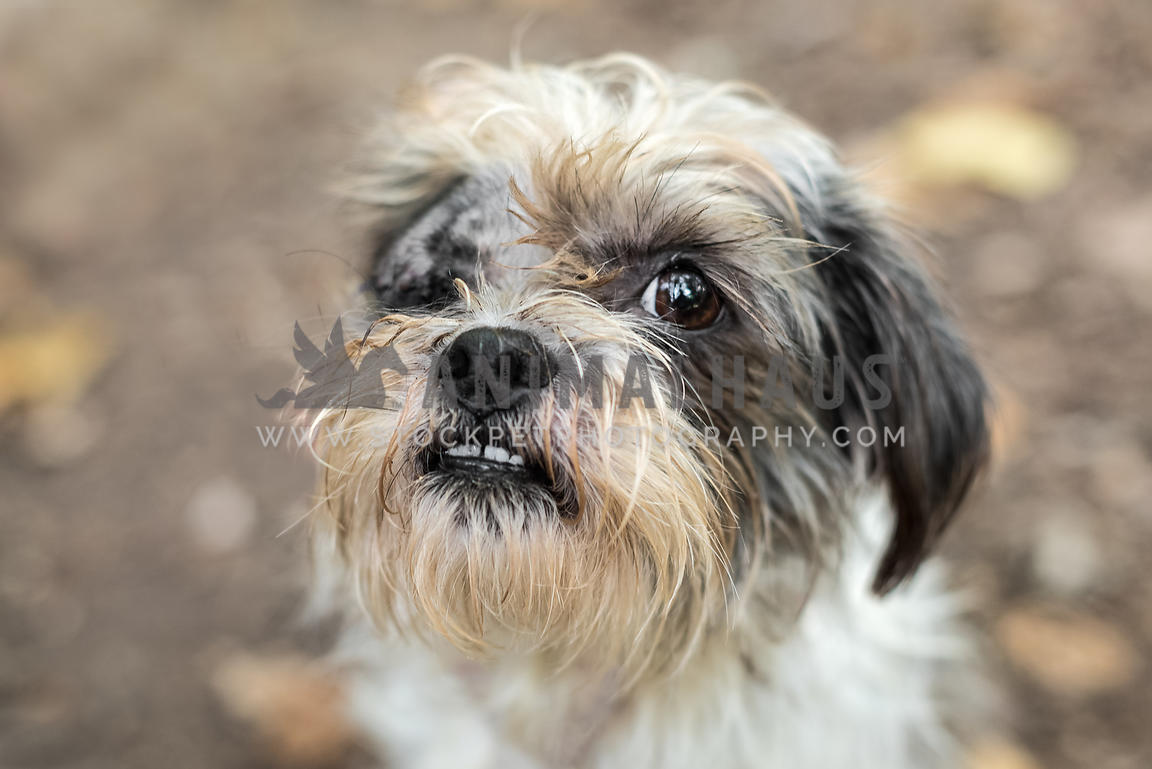 Small scruffy shelter dog with one eye
