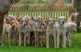 Cottesmore hounds at the meet in Morborne, 23/1