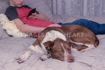 close up of sleeping dog with boy on bed