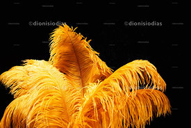 Background with detail of carnival fancy feathers in yellow