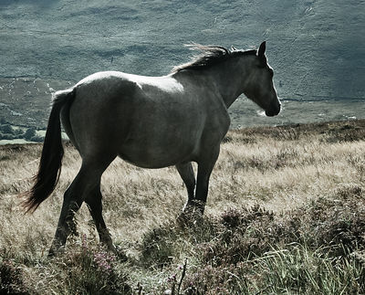 Dublin_mountains_horse