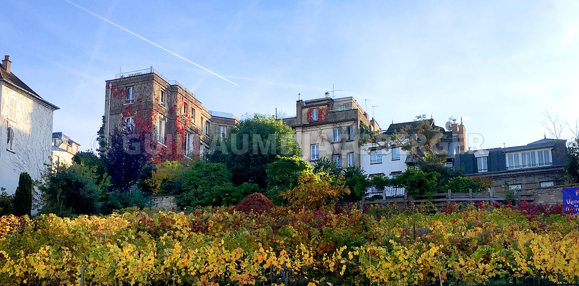 Vine-field-Montmartre-Paris-003