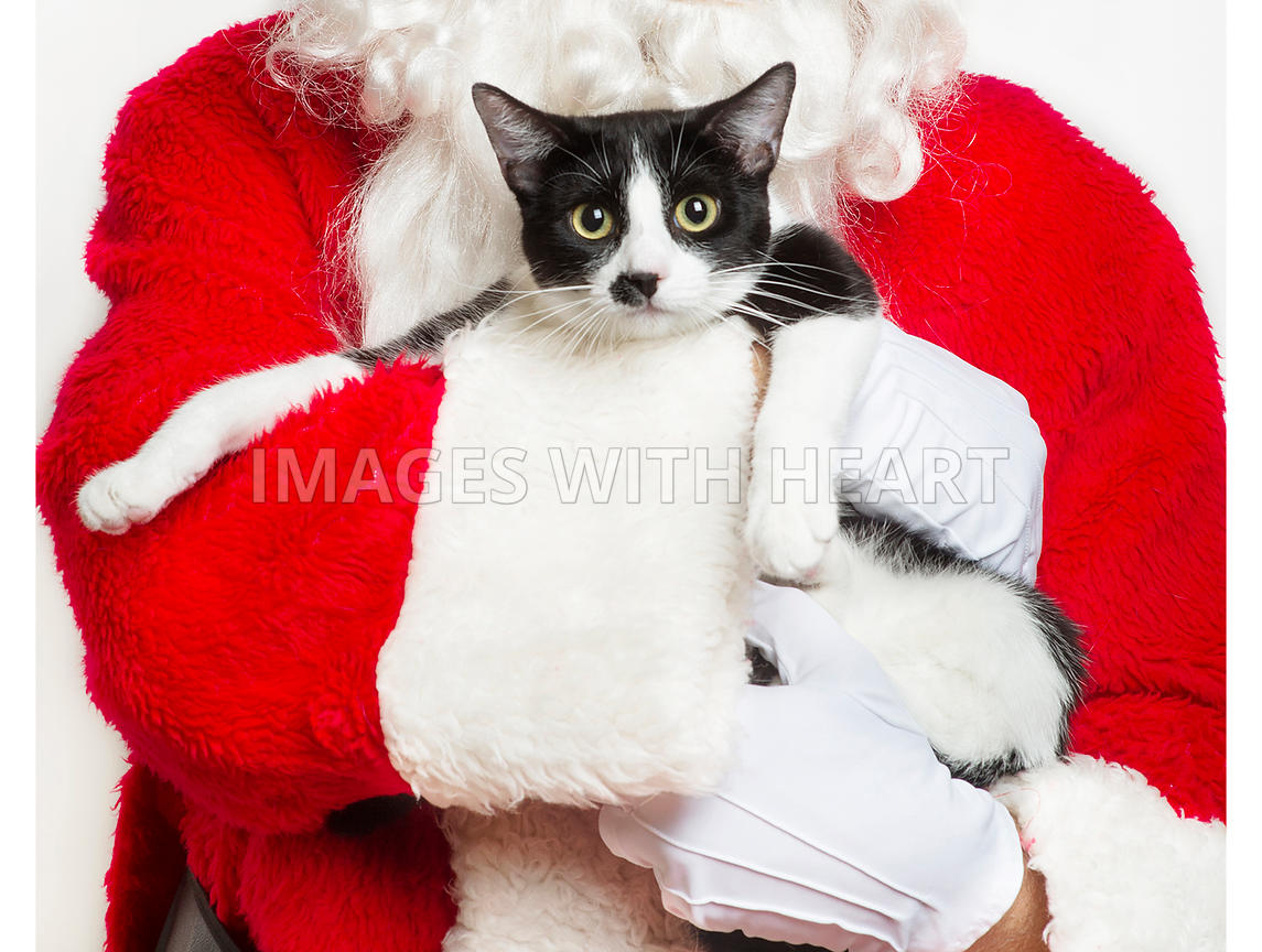 Santa holding a black and white cat