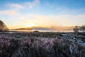 Foggy lake behind frosty heather