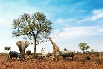 African Safari Animals Meeting Together Around Tree