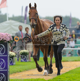Sarah Wardell and KILLEENDUFF BOY -The first vets inspection (trot up),  Land Rover Burghley Horse Trials, 3rd September 2014.