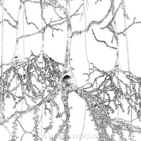 Neurons Outline